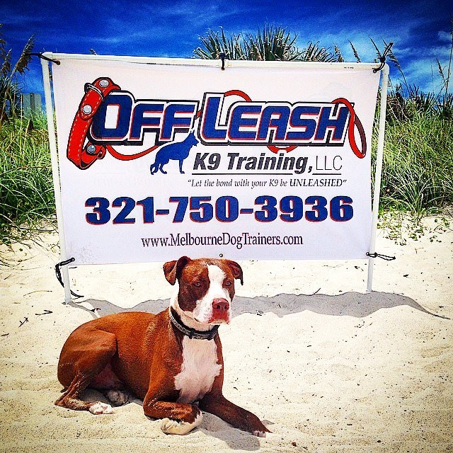 Off Leash K9 Training Central Florida