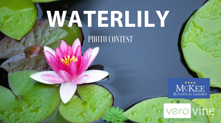 2019 Waterlily Photo Contest